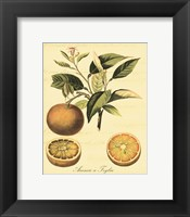 Petite Tuscan Fruits III Framed Print