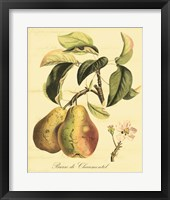Framed Petite Tuscan Fruits IV