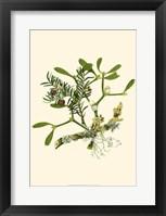 Framed Mistletoe Branch