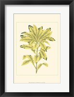 Tropical Variegation IV Framed Print