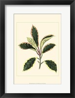 Tropical Variegation V Framed Print