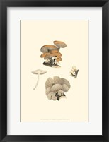 Framed Curtis Mushrooms I