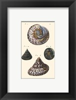 Sea Shells II Framed Print