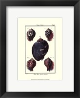 Sea Shells VII Framed Print