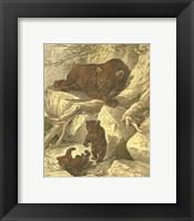 Framed Small Brown Bear