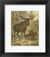 Framed Small Moose