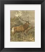 Framed Small Red Deer
