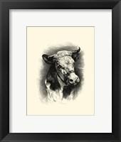 Framed Antique Cattle I