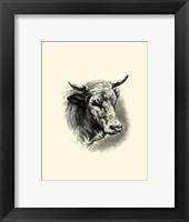 Framed Antique Cattle II