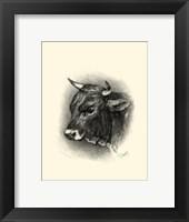 Framed Antique Cattle IV