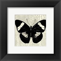 Framed Classical Butterfly III