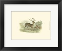 Framed Petite Red Deer
