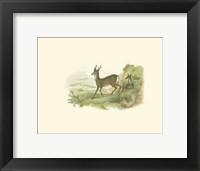 Framed Petite Row Deer