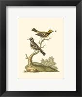 Framed Petite Bird Study II