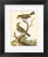 Framed Petite Bird Study IV