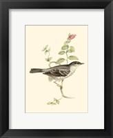 Framed Gould's Barred Warbler