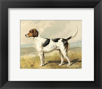 Framed Fox Hound