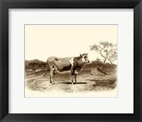 Framed Bovine I