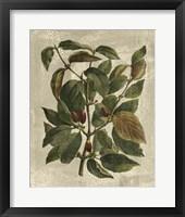 Framed Tree II