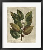 Framed Tree IV