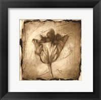 Framed Floral Impression II