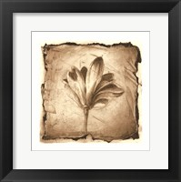 Framed Floral Impression VII