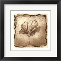 Framed Floral Impression IX