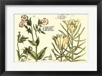 Framed Garden Botanica III