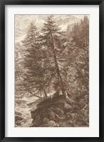 Framed Sepia Larch Tree