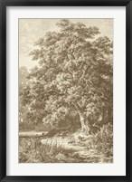 Framed Sepia Oak Tree