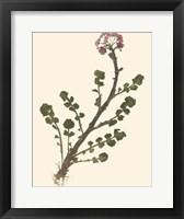 Framed Pressed Botanical II