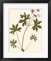 Framed Pressed Botanical III