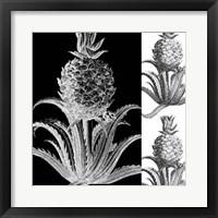 Framed Pop Pineapple II
