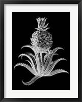 Framed Pineapple Noir II