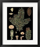 Framed Dramatic Conifers I