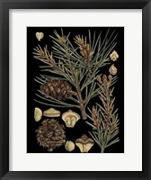 Framed Dramatic Conifers II