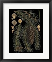 Framed Dramatic Conifers III