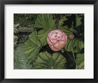 Framed Enchanting Lotus