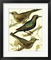 Framed Domestic Bird Family IV