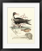 Framed Aquatic Birds I