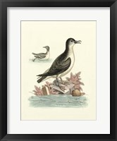 Framed Aquatic Birds III