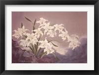 Framed White Orchids