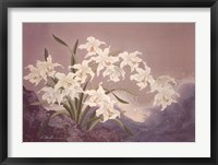 Framed White Orchids