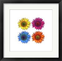 Framed Flowers - Pop