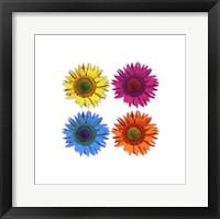 Framed Flowers - Pop