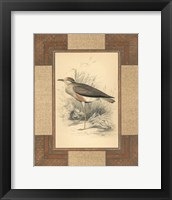 Framed Lowland Courier