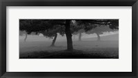 Framed Trees In The Fog