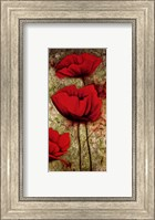 Framed Poppies III