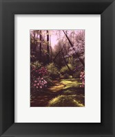 Framed Spring Woods