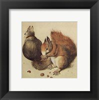 Framed Squirrels, c.1512